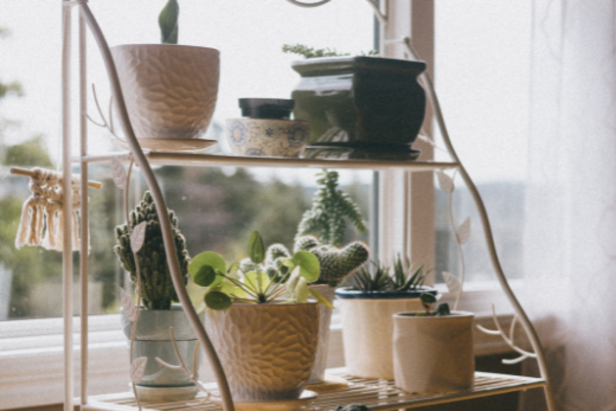 Cacti don't need to be watered as often as most plants, so they are good options for Airbnb hosts.