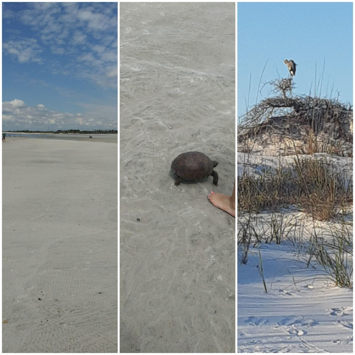 camping-and-traveling-reviews-little-talbot-island