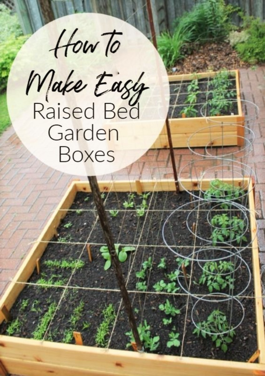 6 Reasons to Plant Your Own Organic Vegetables and Fruit Garden at Home