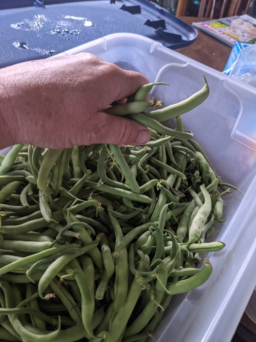 green-beans-preparing-for-cooking