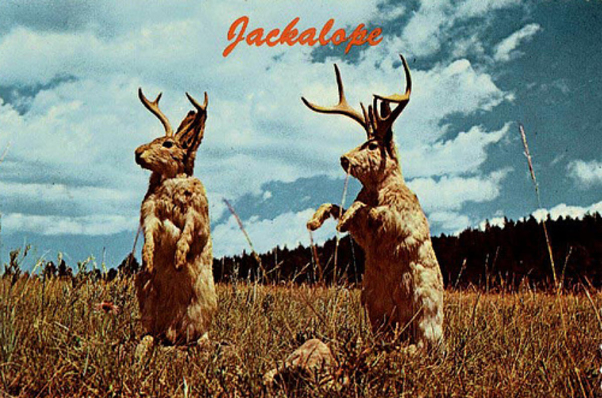 Literary Analysis of the Writings of a Jackalope