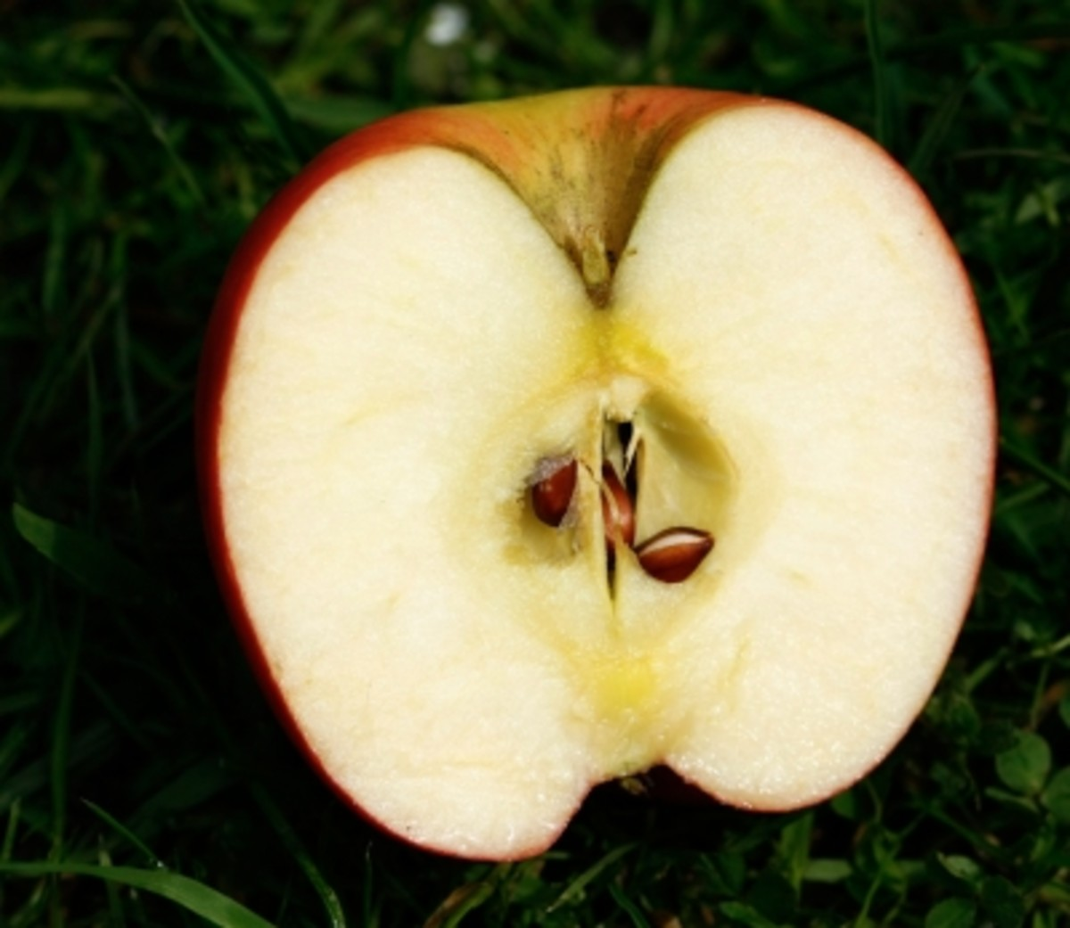 not only do apples benefit your health but your oral hygiene too.