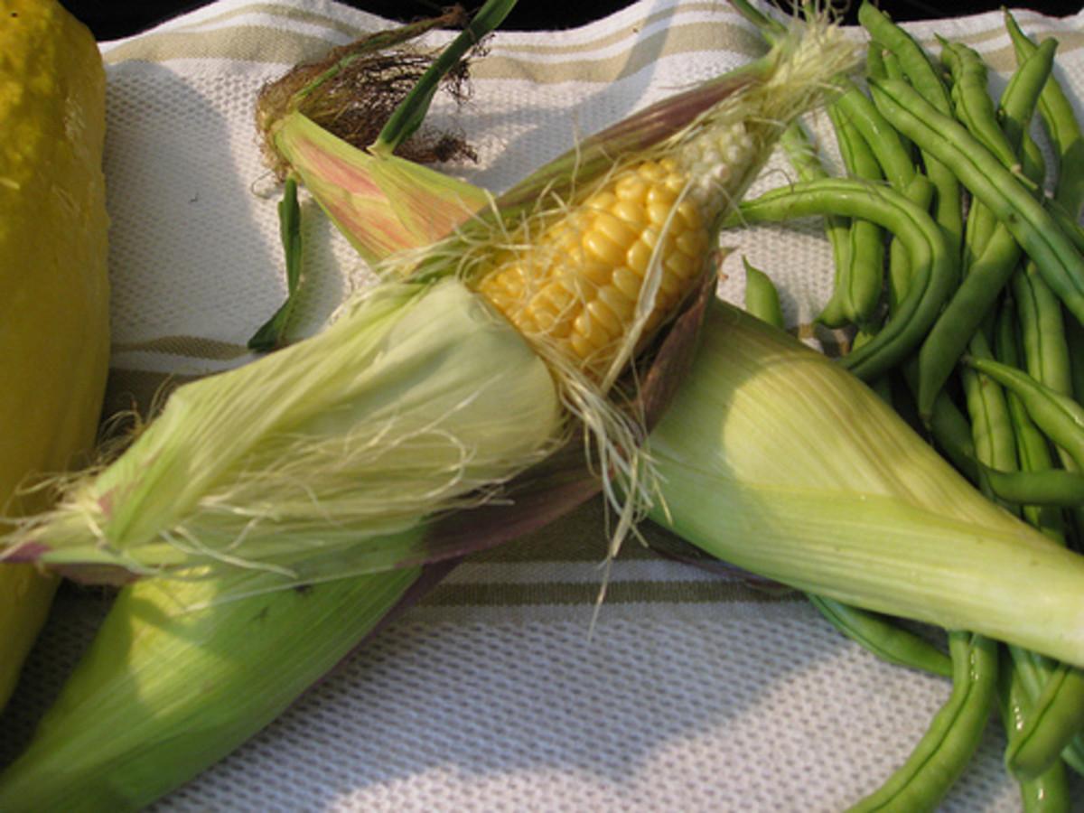 Fresh Harvest Corn (Photo courtesy by feserc from Flickr.com)