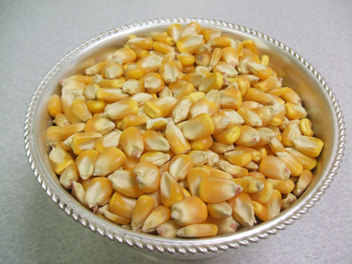 Kernels of Corn (Photo courtesy by Nieve44La Luz from Flickr.com)