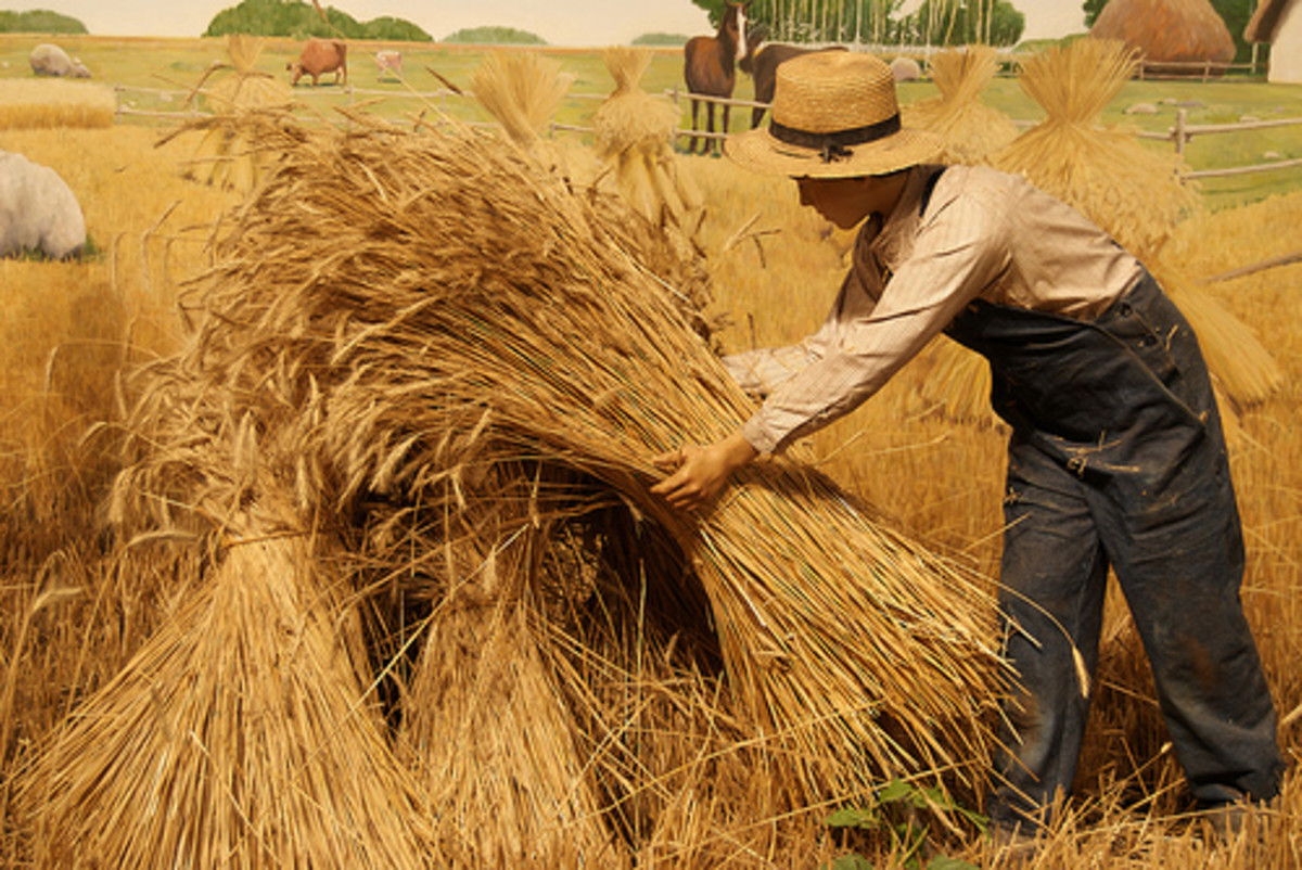 Wheat Harvest Time (Photo courtesy by FeatheredTar from Flickr.com)