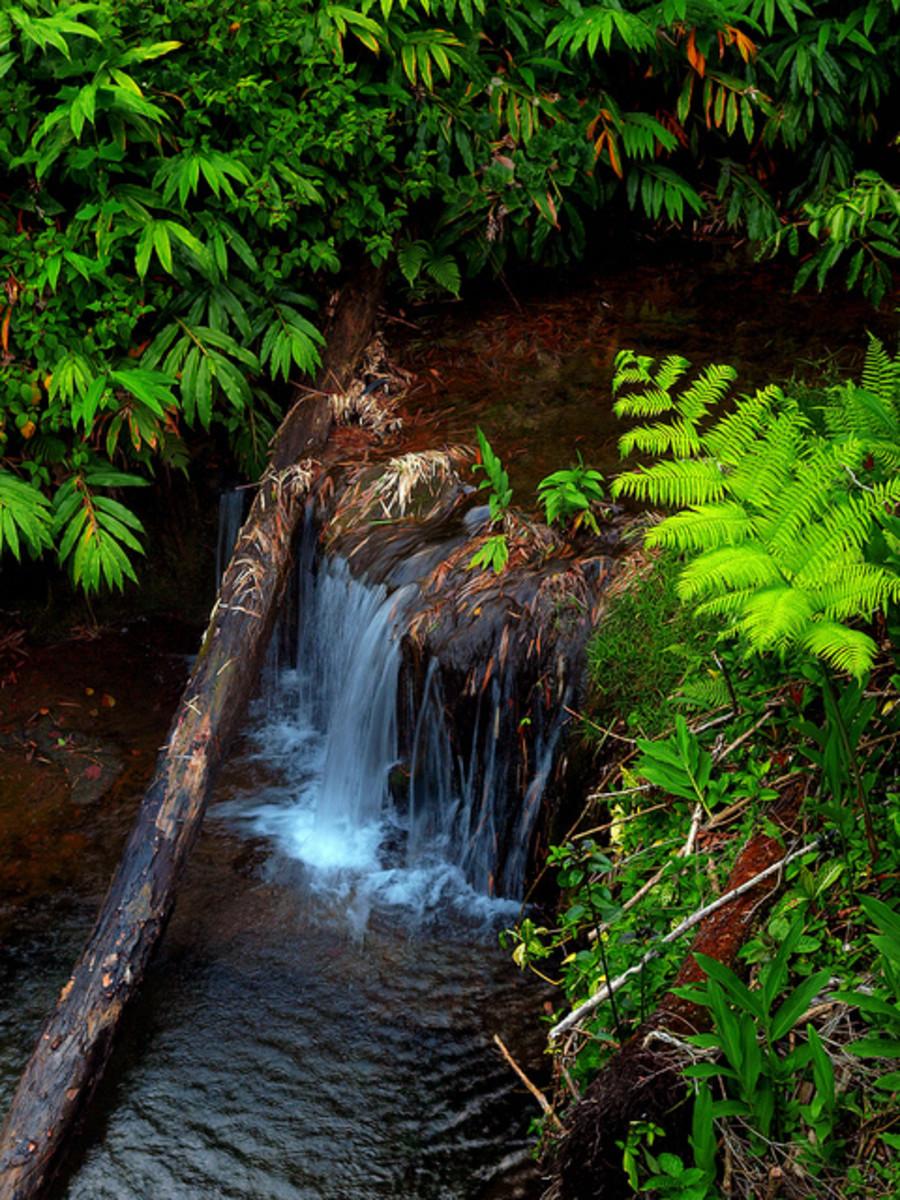 Akaka Falls State Park in Hawaii.