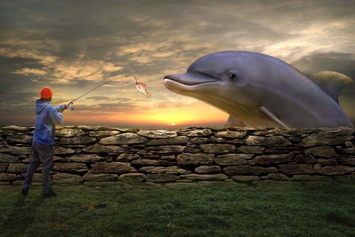 Fish on Land