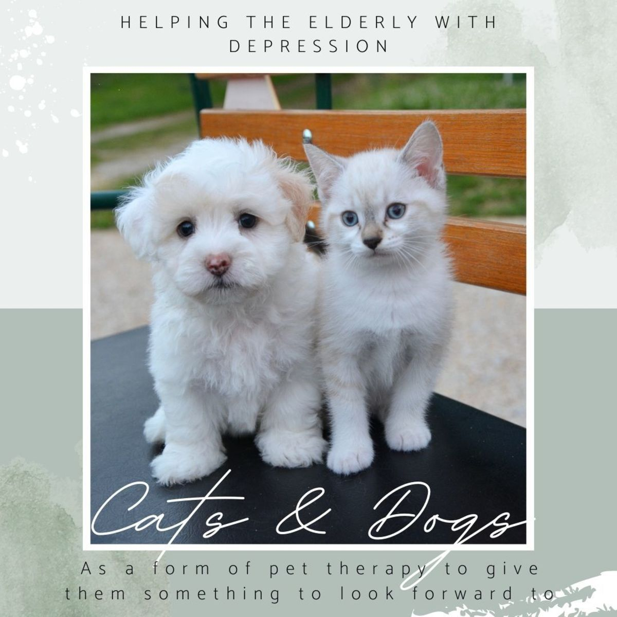 Pet such as dog or cat can be good therapy for elderly people who are down with depression