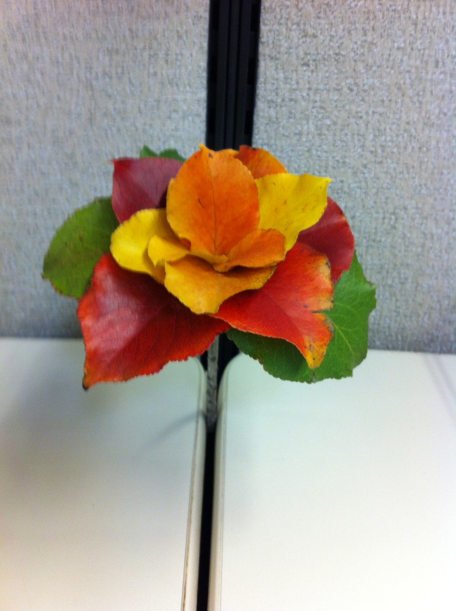 fall-flowers-for-autumn-bouquets