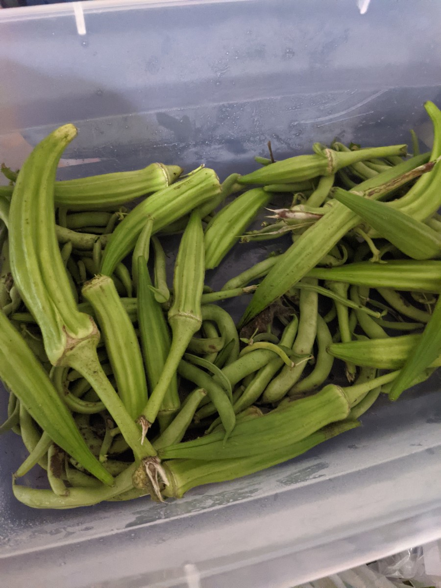 okra-deep-fried-and-delicious