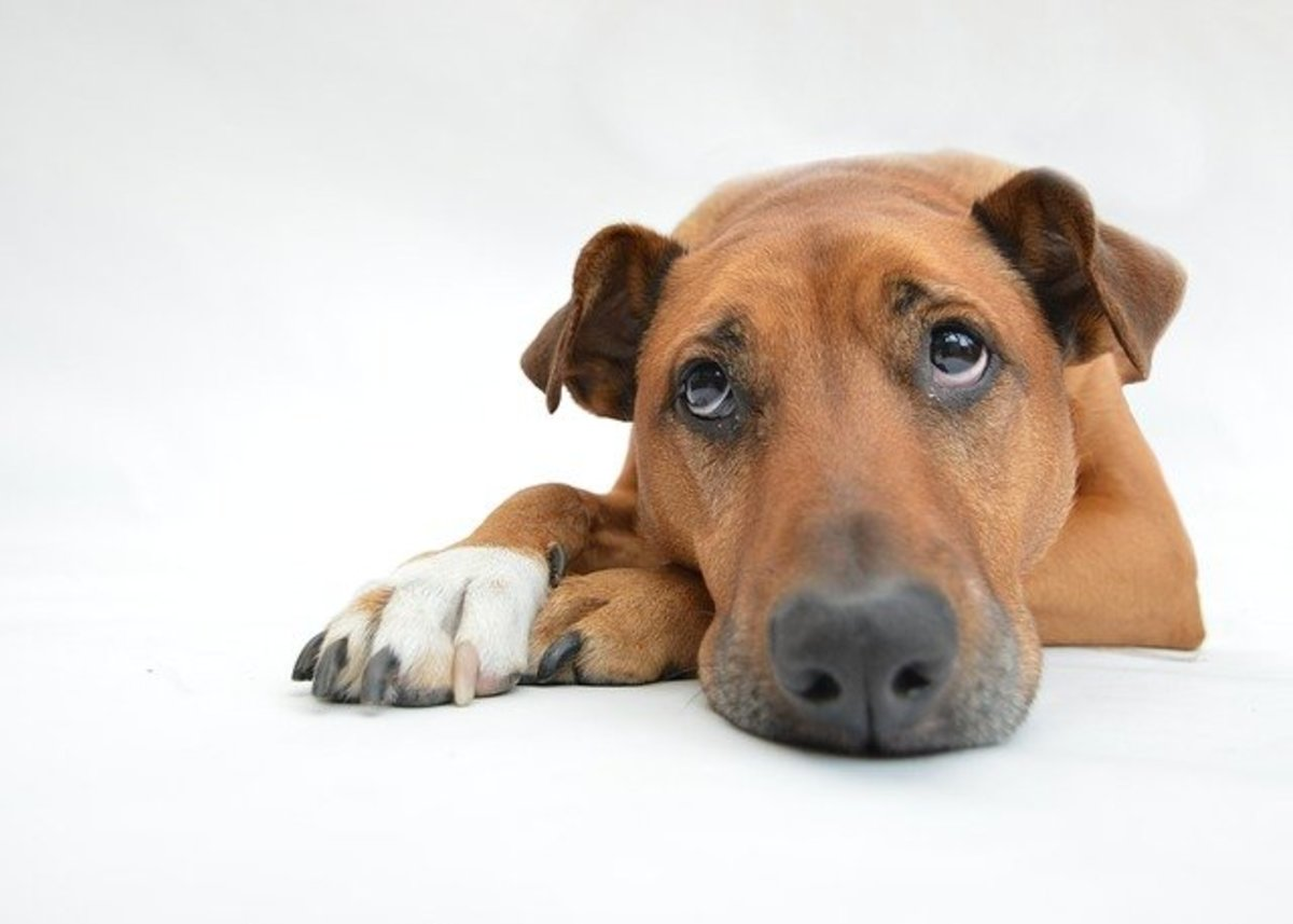 Other pets in your home may be grieving as well.