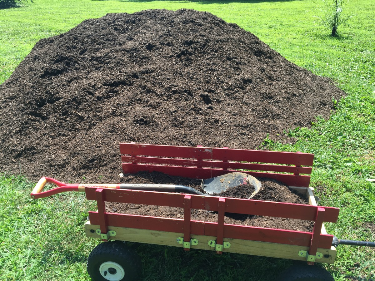 Mulch is great for keeping all-important moisture trapped in—but don't put mulch right on top of the base!