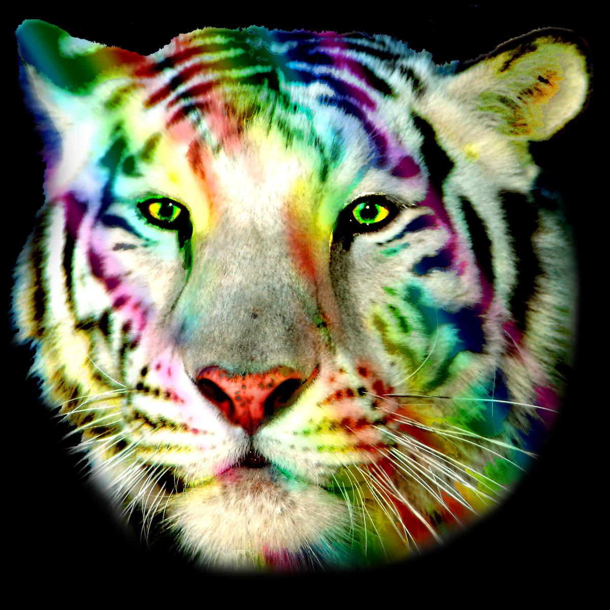 Rainbow Tiger !