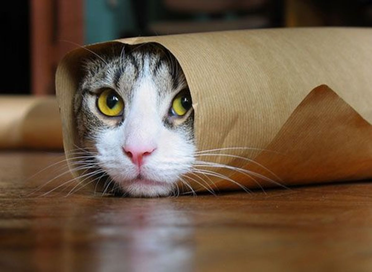 Craft Paper and or Paper Bag