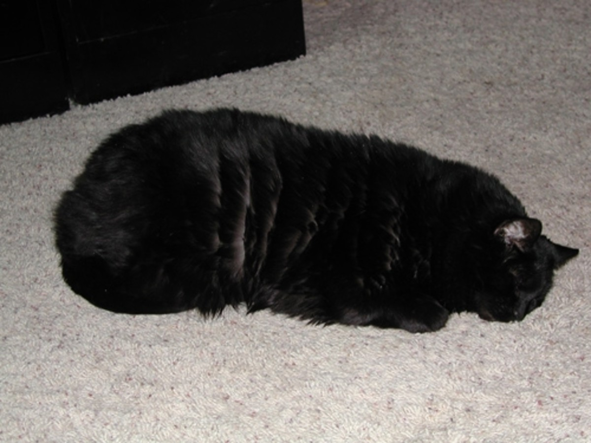 Chub Chub voted for the Boogie mat...and hair ties which didn't make the cut.