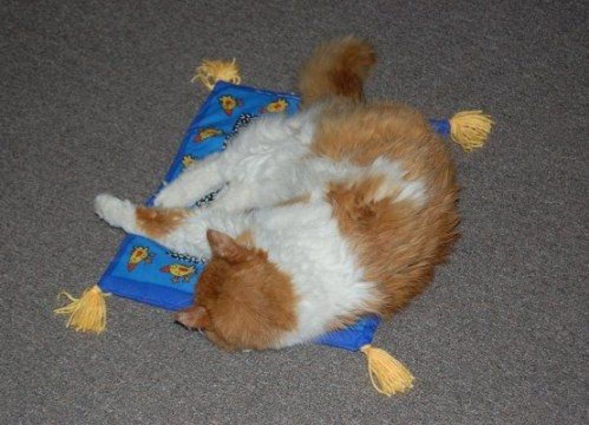 Fat Cat Kitty Hoots Boogie Mat for de Cat Oriental