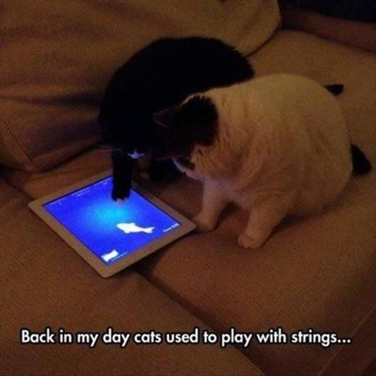 top-ten-cat-toys