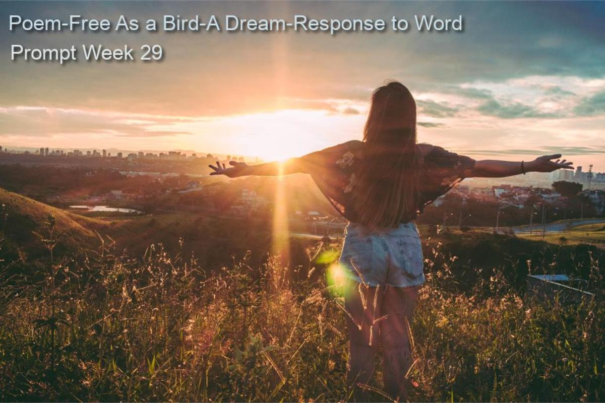 Poem-Free as a Bird-A Dream