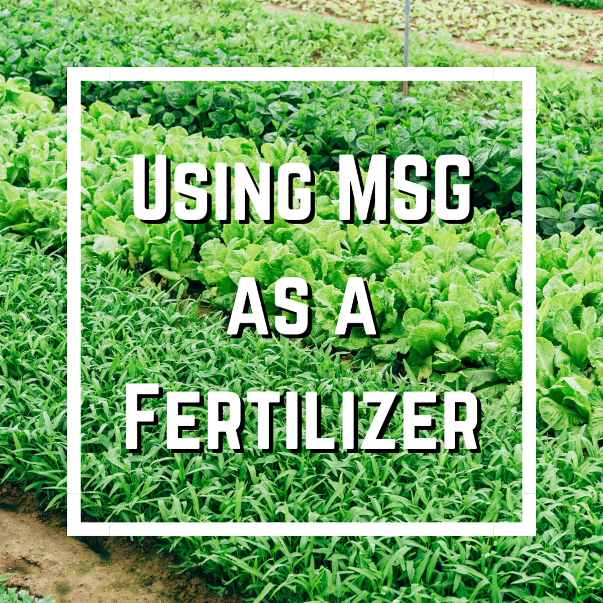 This article reviews all you need to know about MSG as a plant fertilizer, including its benefits, downsides, and preparation. You'll also find extra info on MSG-related health concerns.