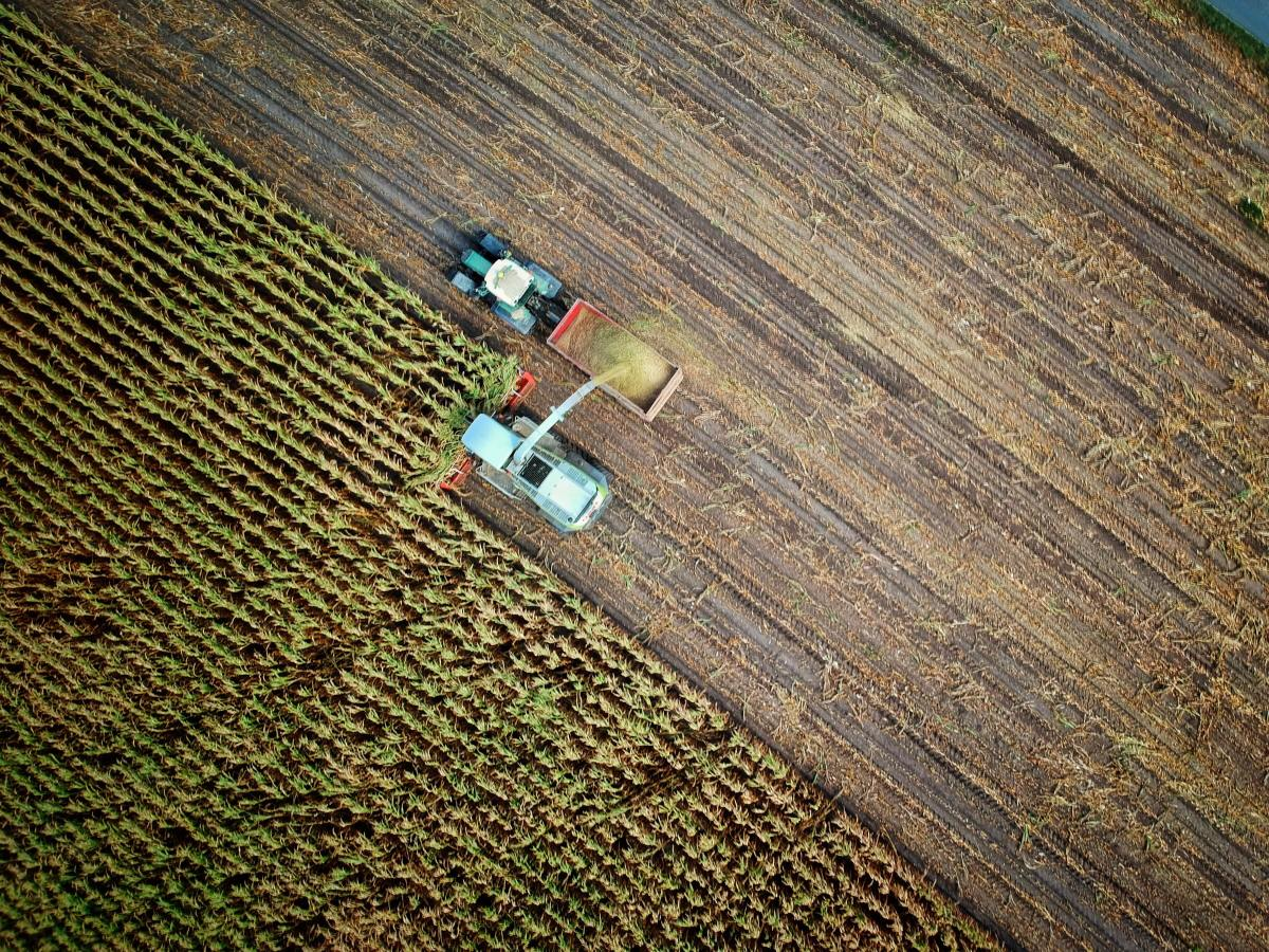 """MSG is sometimes used in large-scale agriculture. However, the MSG used in these scenarios is not regular MSG, but rather a synthetic product known as """"processed free glutamic acid."""""""