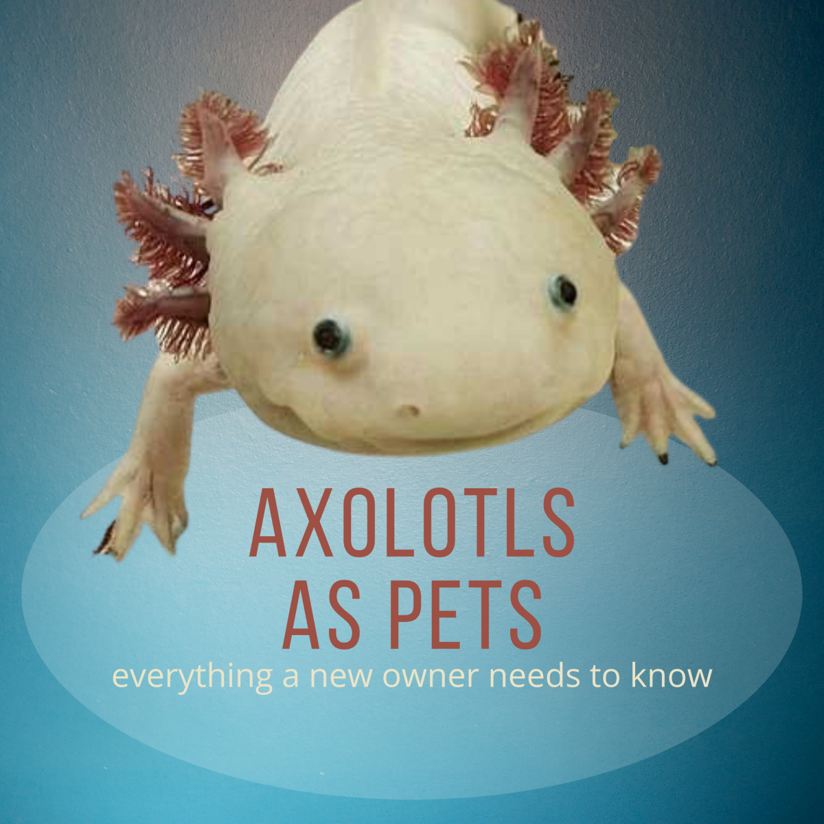 Everything About Axolotls, a Basic Guide for New Owners