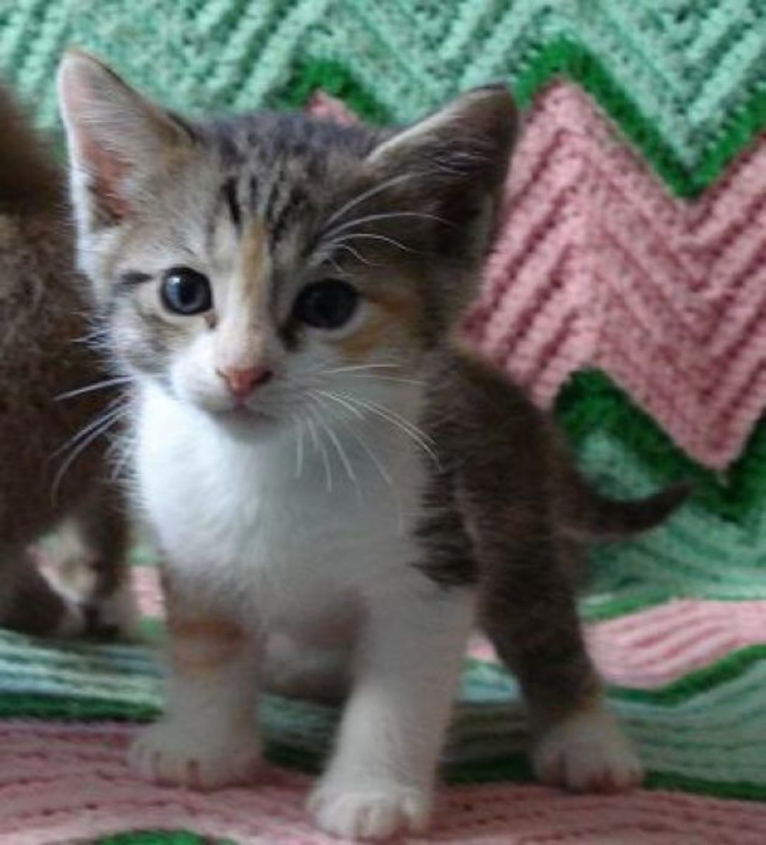 Bitch Kitty as a kitten - wasn't she just precious?