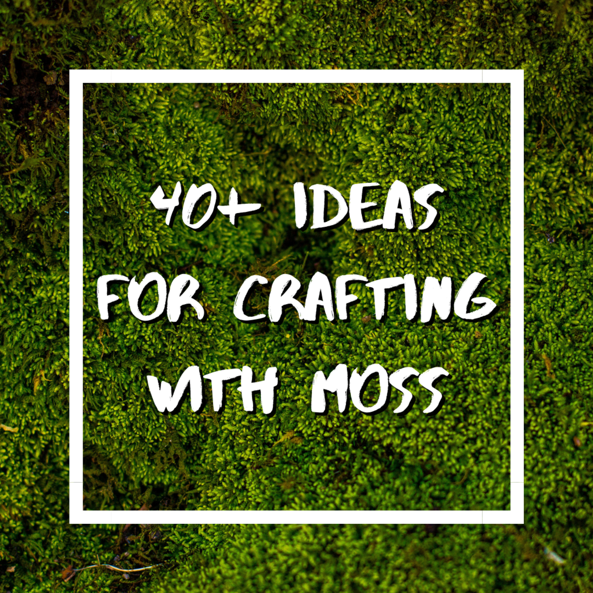 Ever wondered what to do with moss? Believe it or not, you can craft moss into a huge range of unique and fun DIY items!
