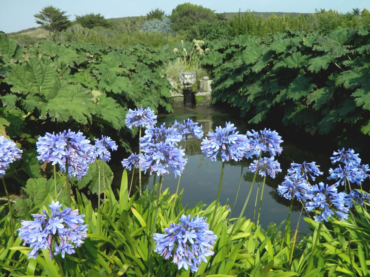 Late-blooming beauties like this agapanthus will add swaths of dreamy blue to your garden after most other pops of color have faded.
