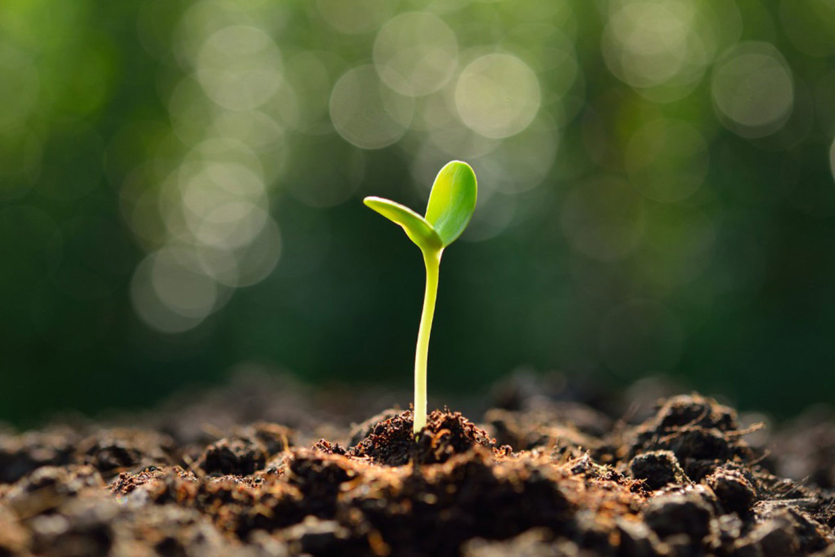Life: Planting It the Right Way