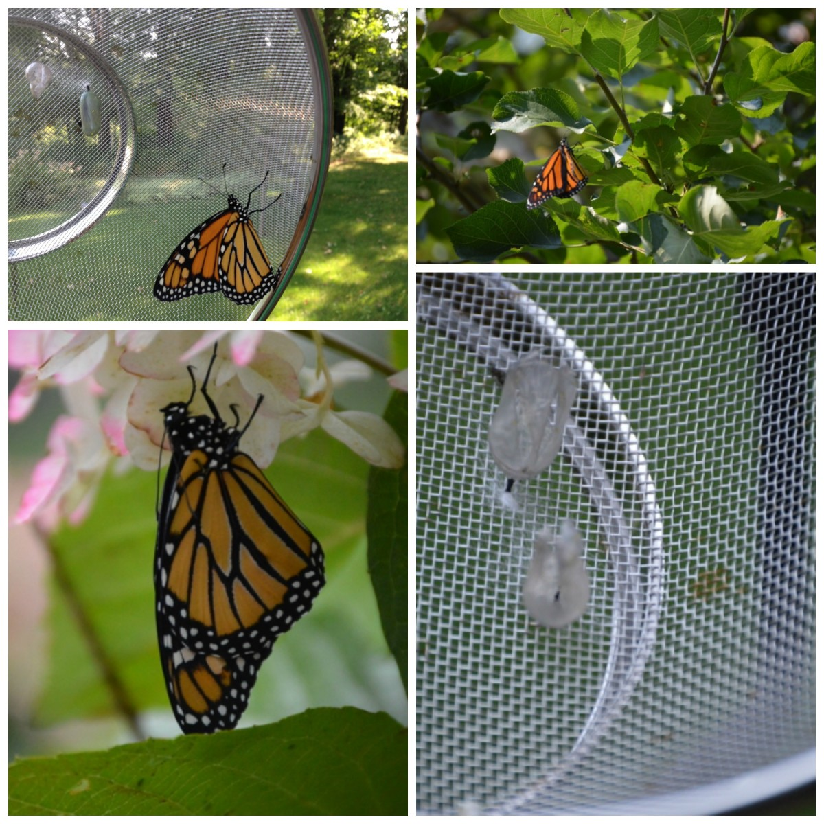 the-bluebirds-and-the-monarchs-have-came-home