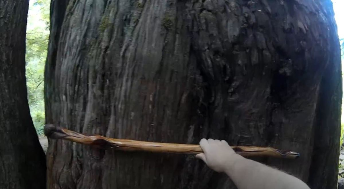 This is a still from a video. My hiking stick is 3.5 feet long. It shows just how wide the circumference is of the trees at this part of the island.