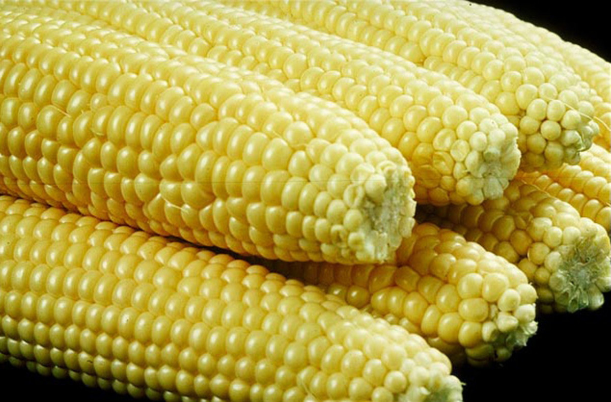 Boiled for corn-on-the-cob or creamed . . .it's all good. I mean, tasty.