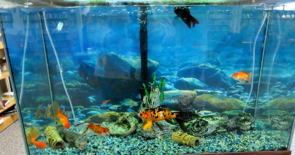 Aquarium inside the Bellaire City Library