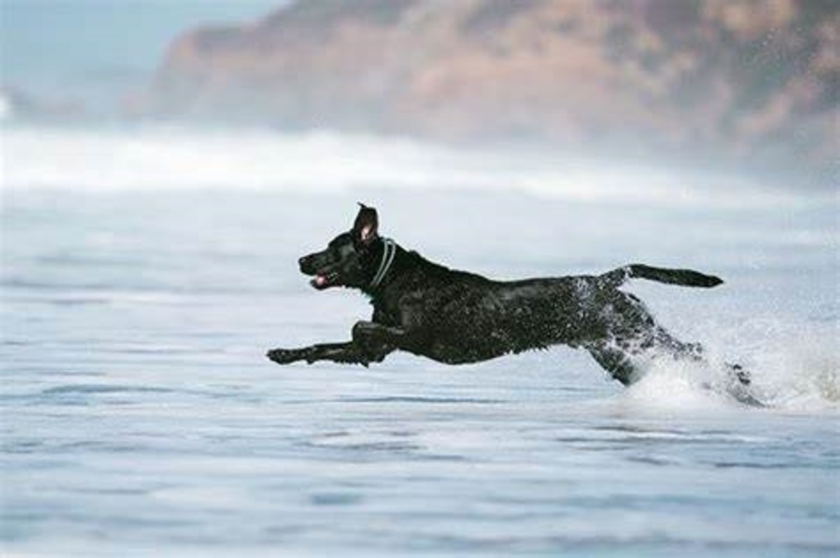 Full speed ahead! Atlas getting after it in Pacifica #...