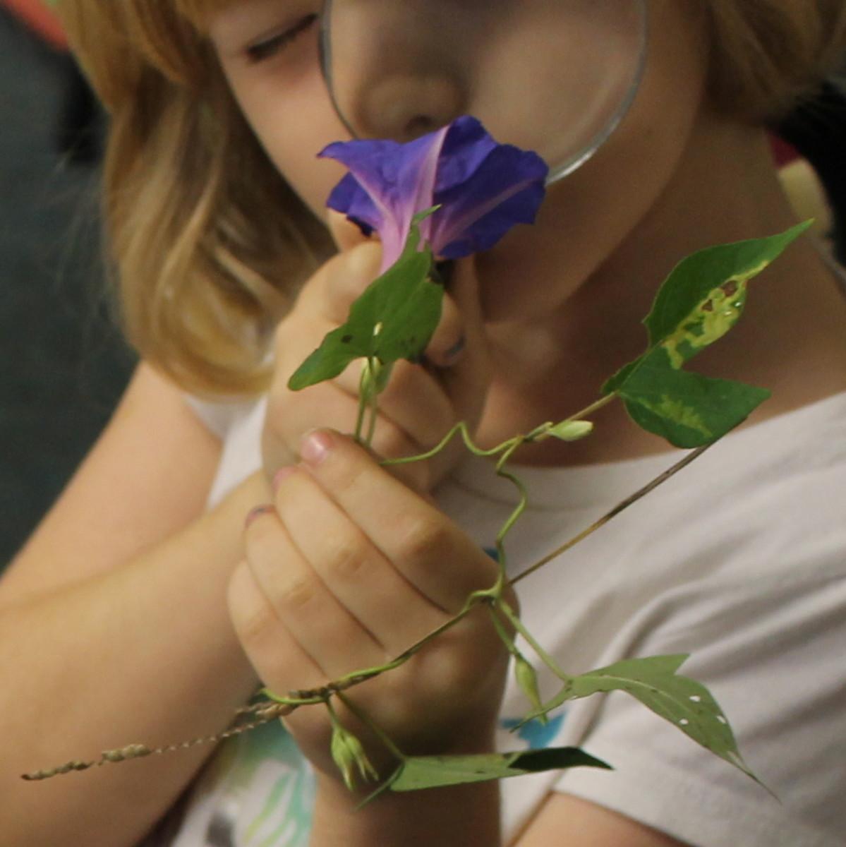 flowers-lesson