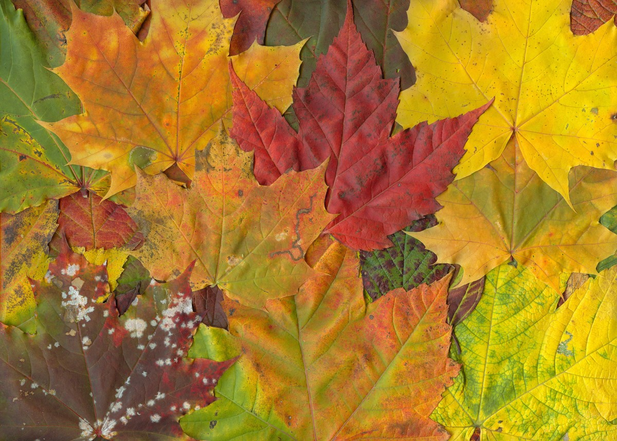 This article will show you how to use leaf mold to improve the quality and health of your soil.