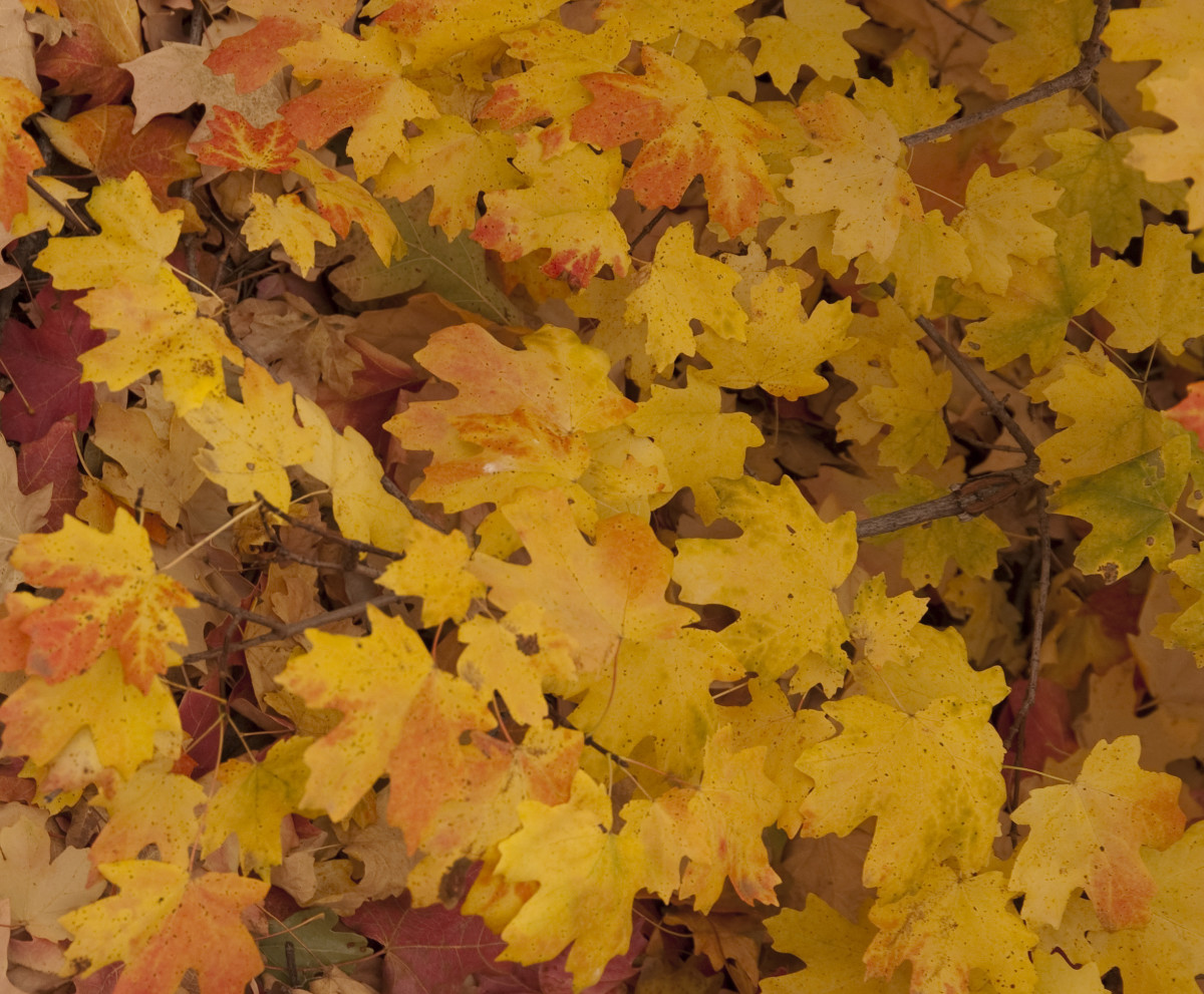 Fallen leaves that aren't shredded can kill grass and attract insects.