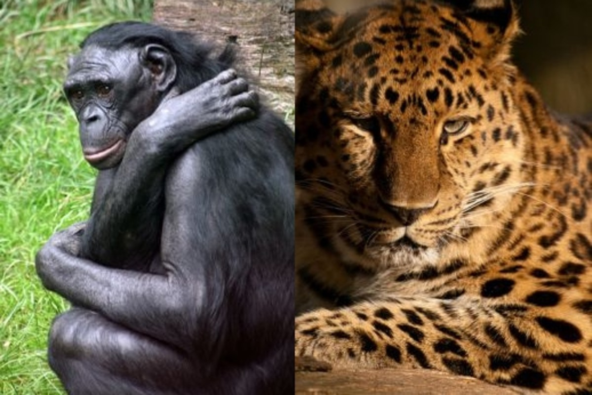 Endangered Animals of the World...