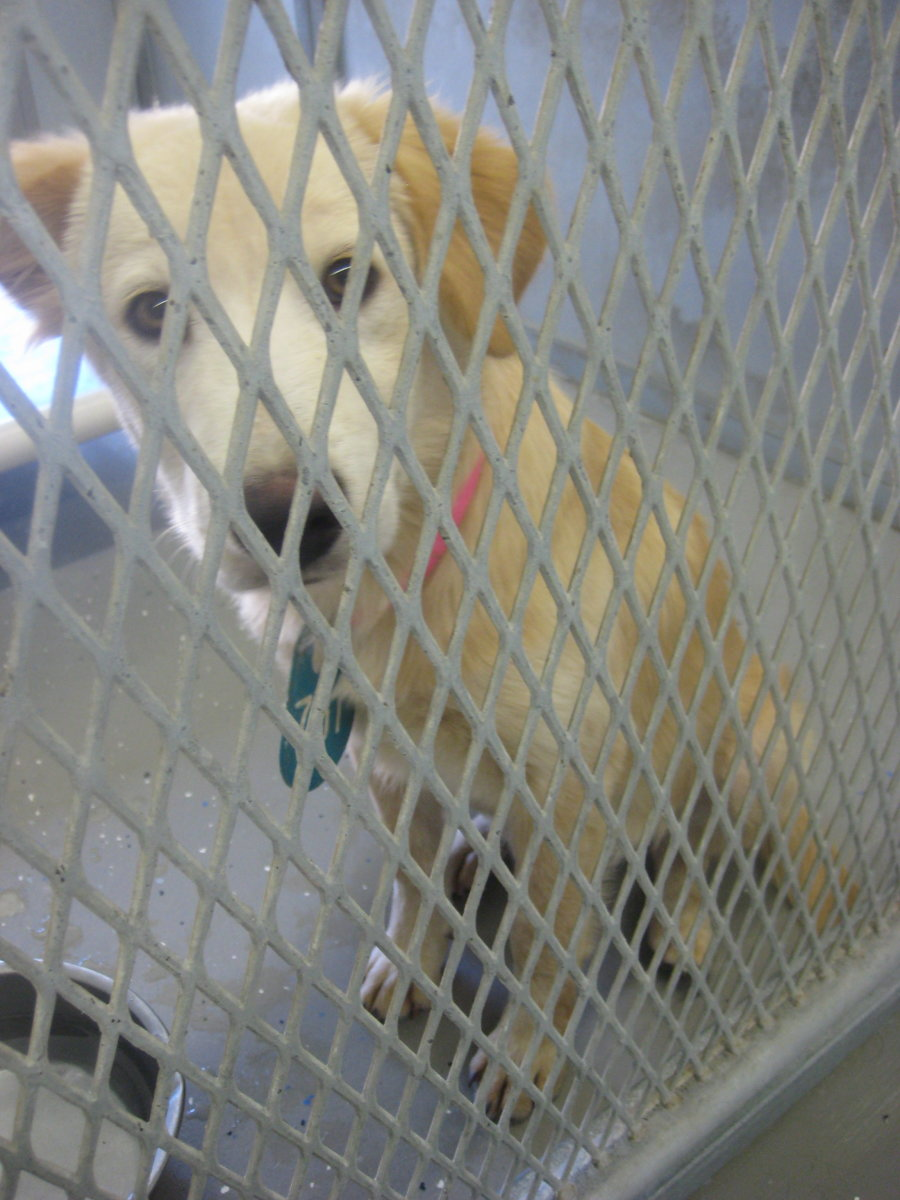 I am a healthy, friendly, well socialized pet! Living in this cage is so depressing. Please don't leave me here to be euthanized! Have me spayed and bring me home, and I will reward you with love, affection and faithful companionship.