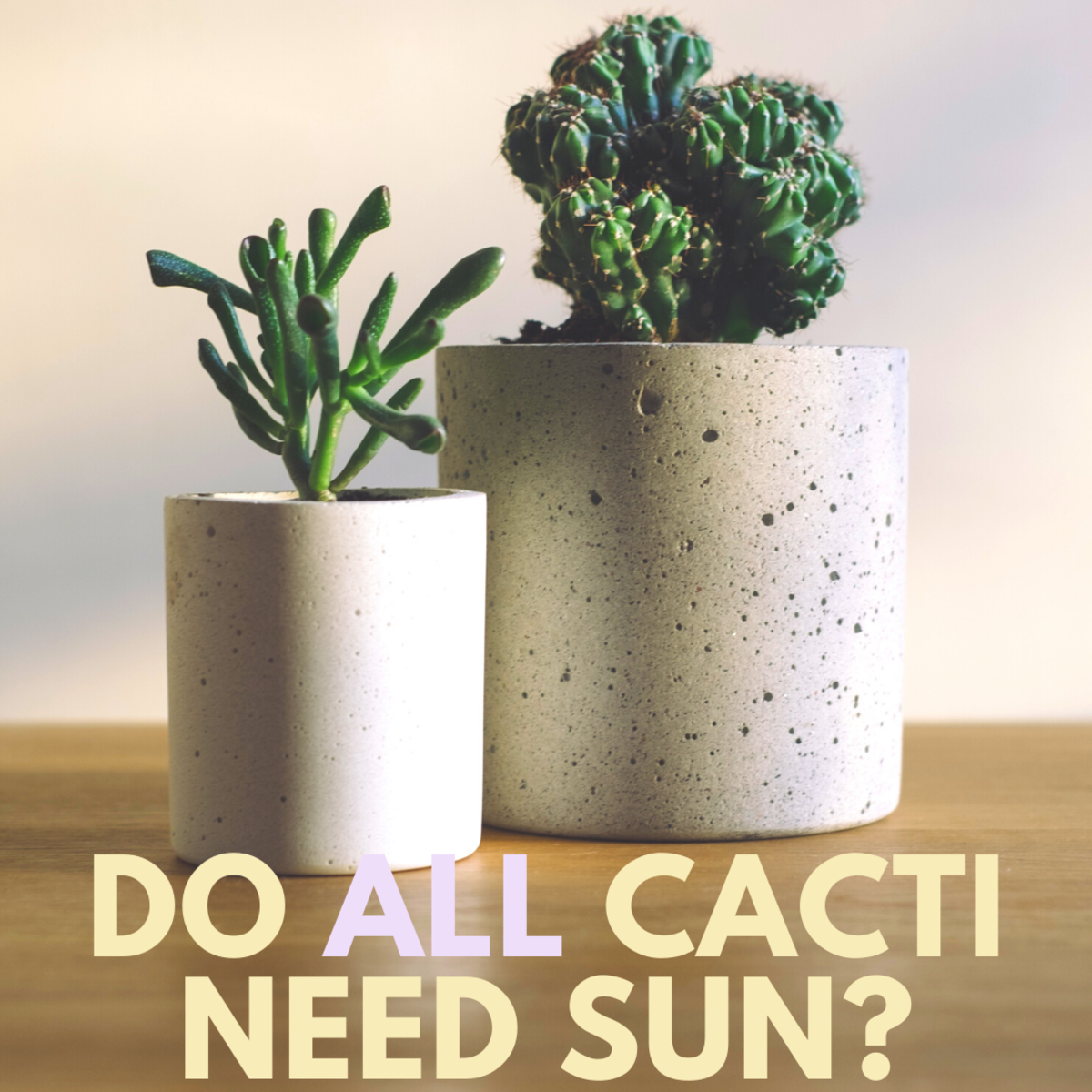 Find out which plant is best for you and your home.