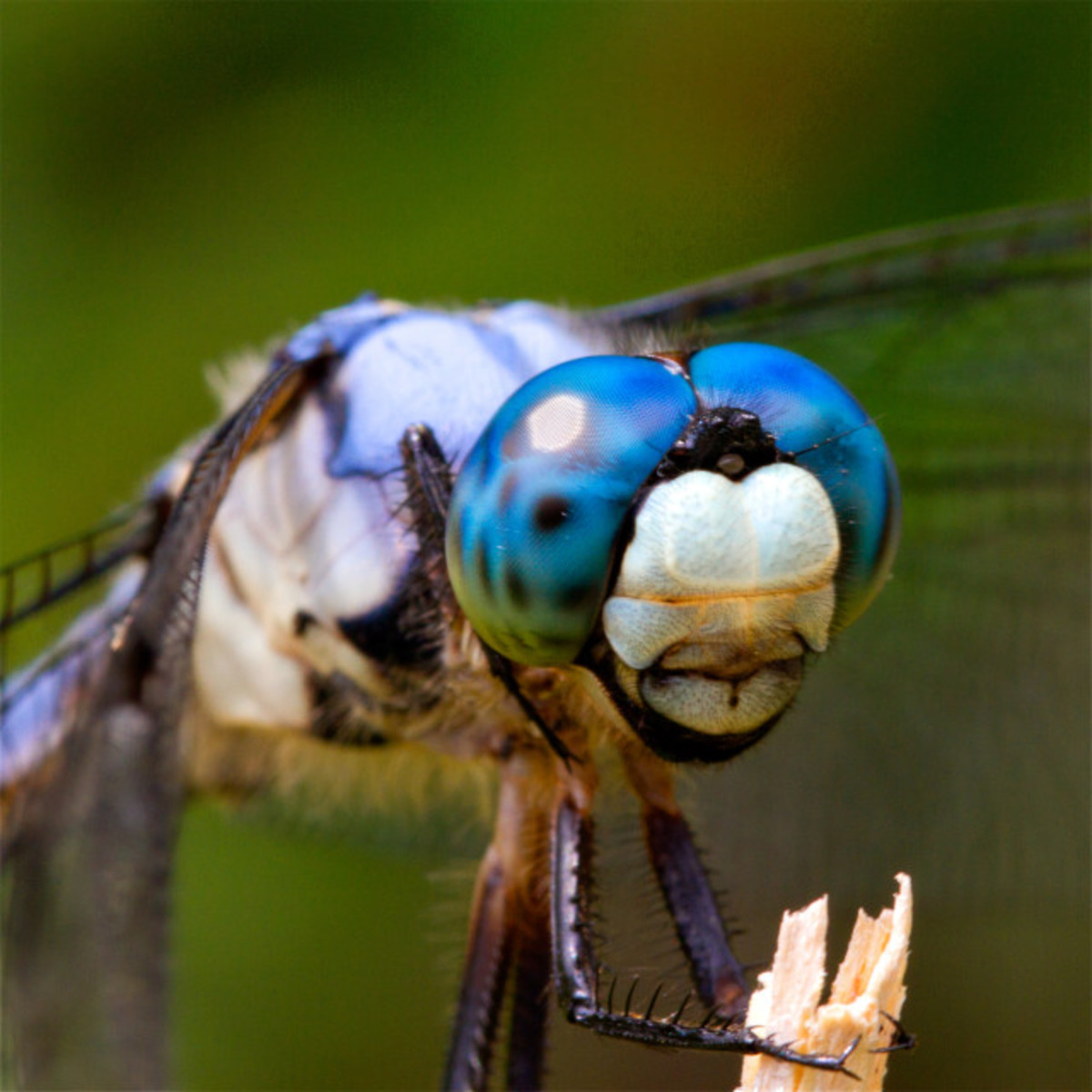 Thoughts About the Dragonfly
