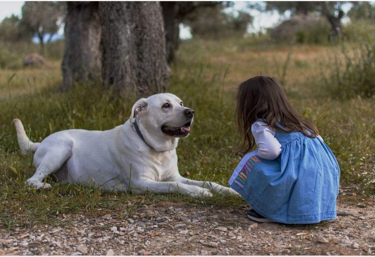 Based on several behavioral measures, Stanley Coren has compared the mental abilities of dogs to be close to a human toddler aged 2 to 2.5 years.