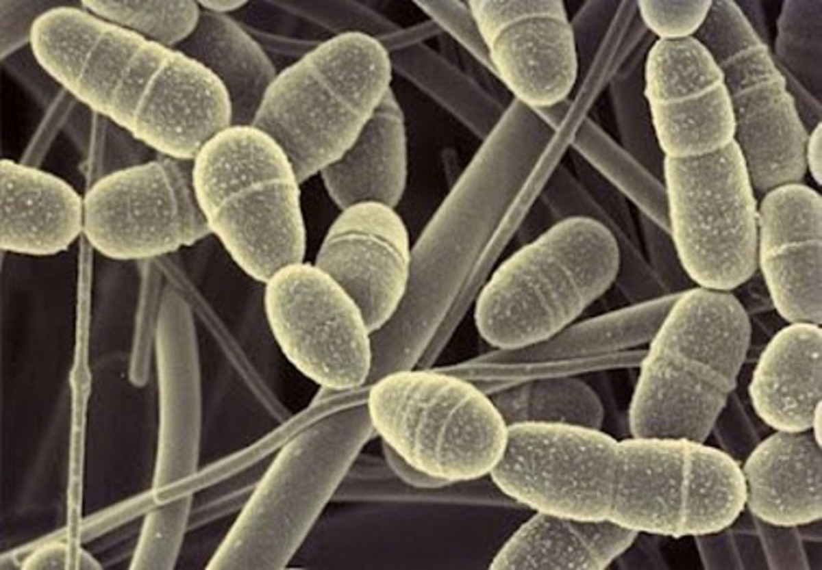 Flossing disrupts Streptococcus mutans bacteria.