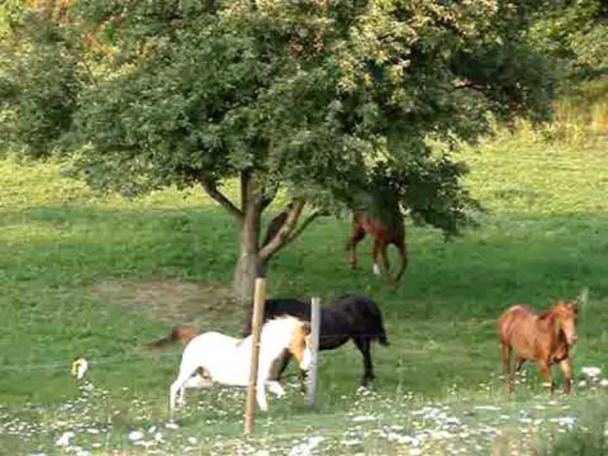 Horses romping in the pasture.