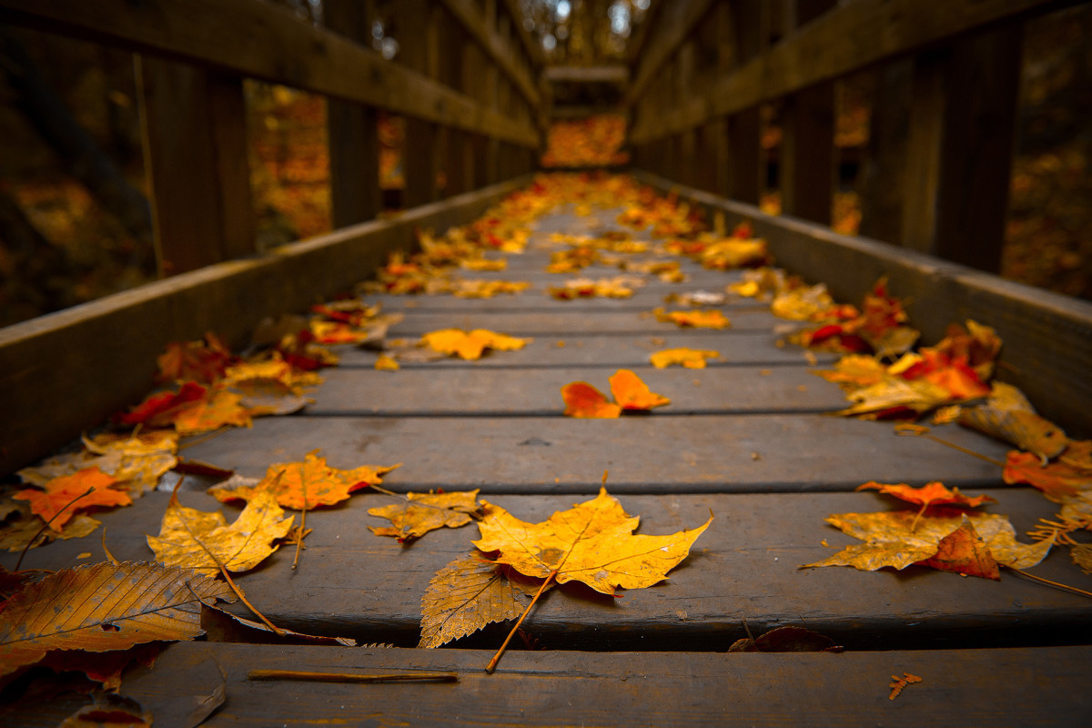 Autumn's Rise:  A Poem