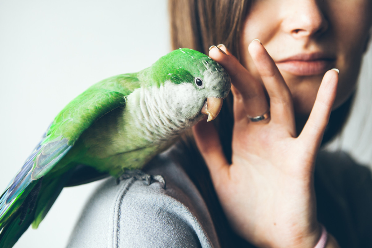 the-essentials-to-owning-a-bird